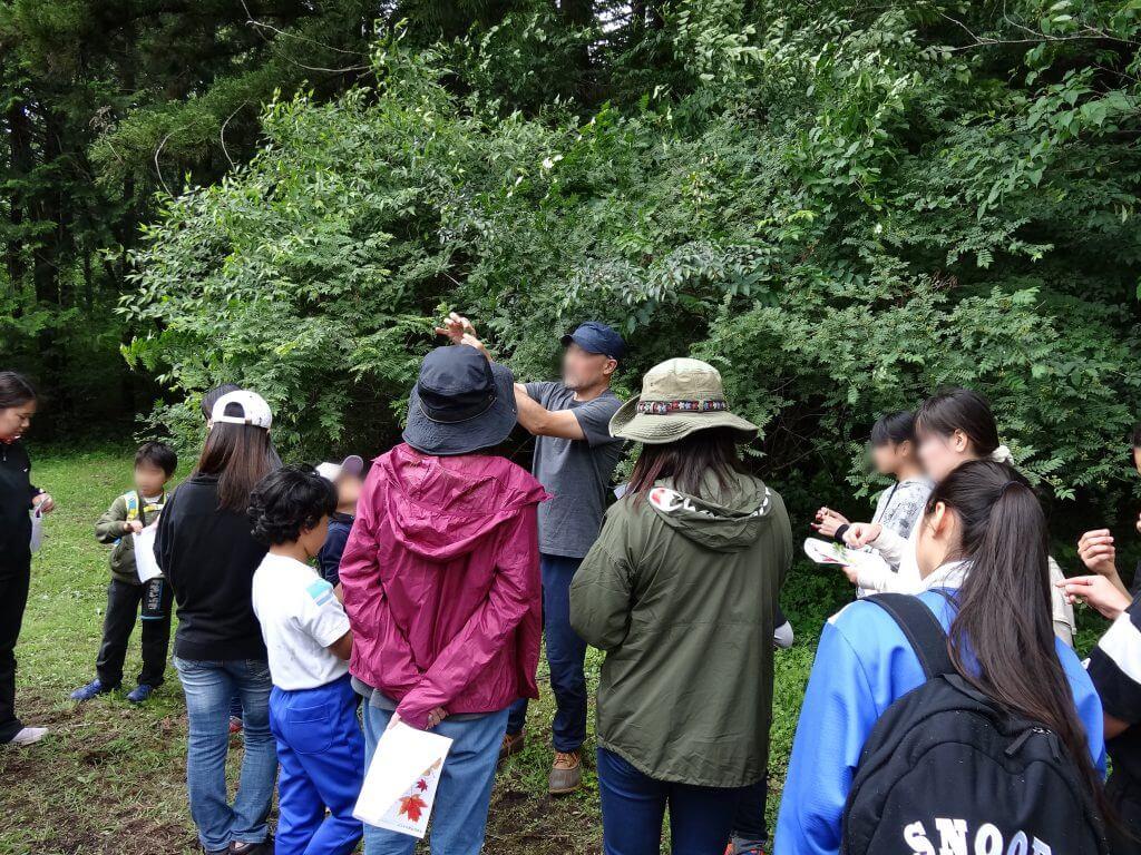 プログラムⅠ 植物観察
