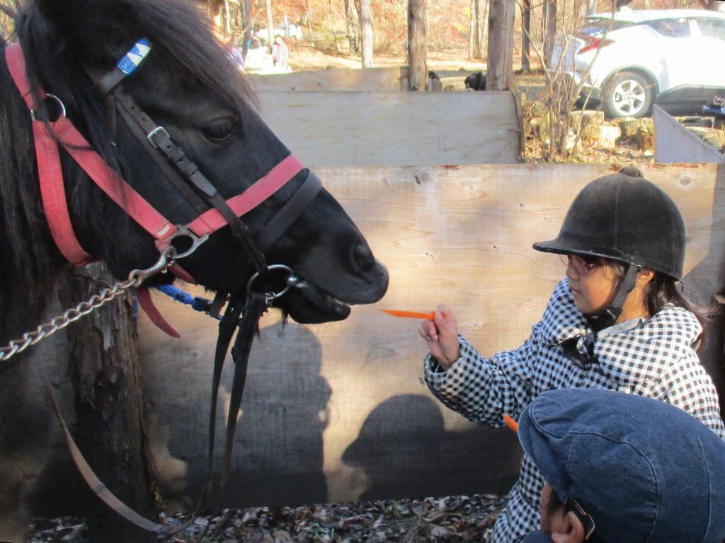 プログラムⅡ ポニーの引き馬体験